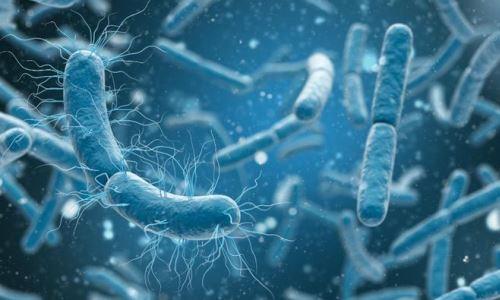 patogeni mikroorganizmi bakterije